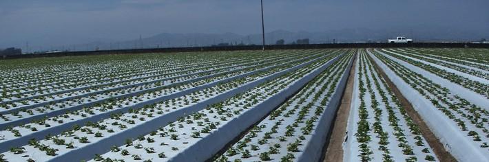 Agricultural Film710 x 236 jpeg 68kB